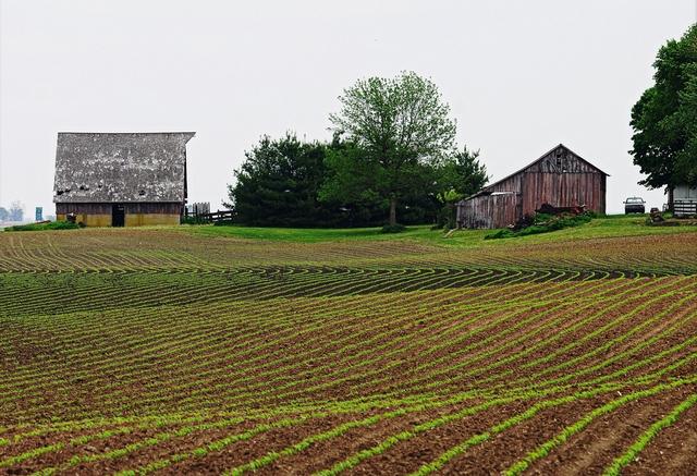 Фермерские хозяйства могут получить помощь из госбюджета