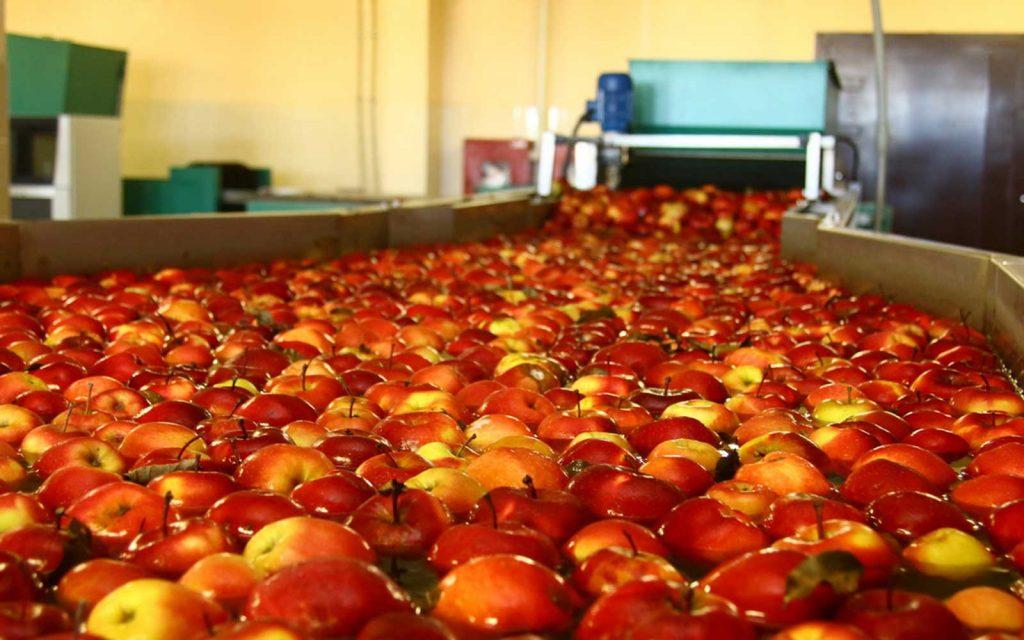 В Тернопольской области открыли огромное фруктохранилище
