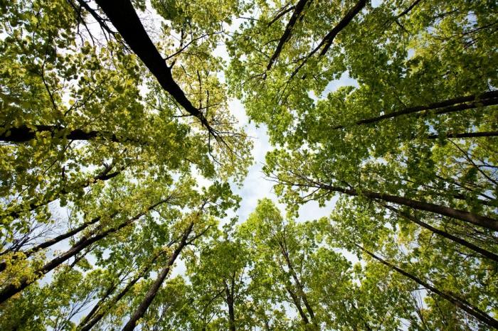 Украина и Австрия будут вместе спасать леса